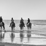 Black and White Photo of Horses on the Beach