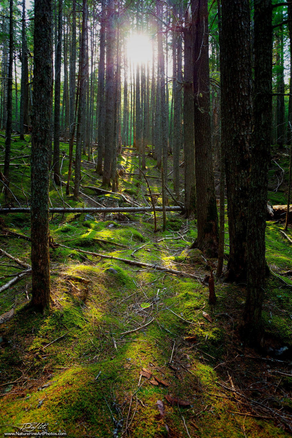 Nature Photo of the Enchanted Forest in Glacier National Park