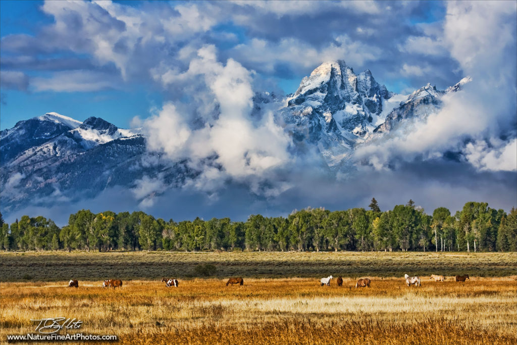 photo of horses grazing with mountains behind