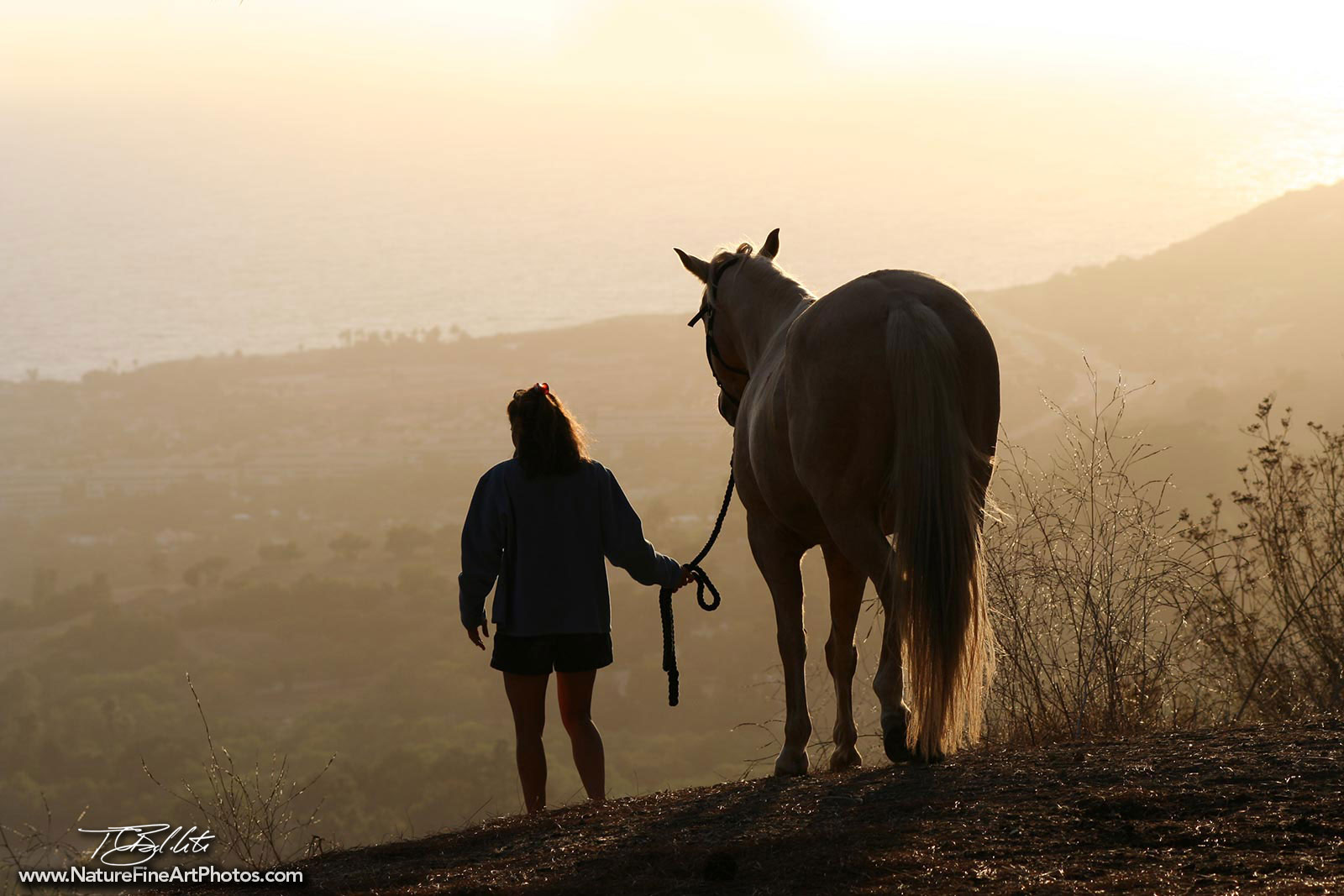 Sunset Horse Photo