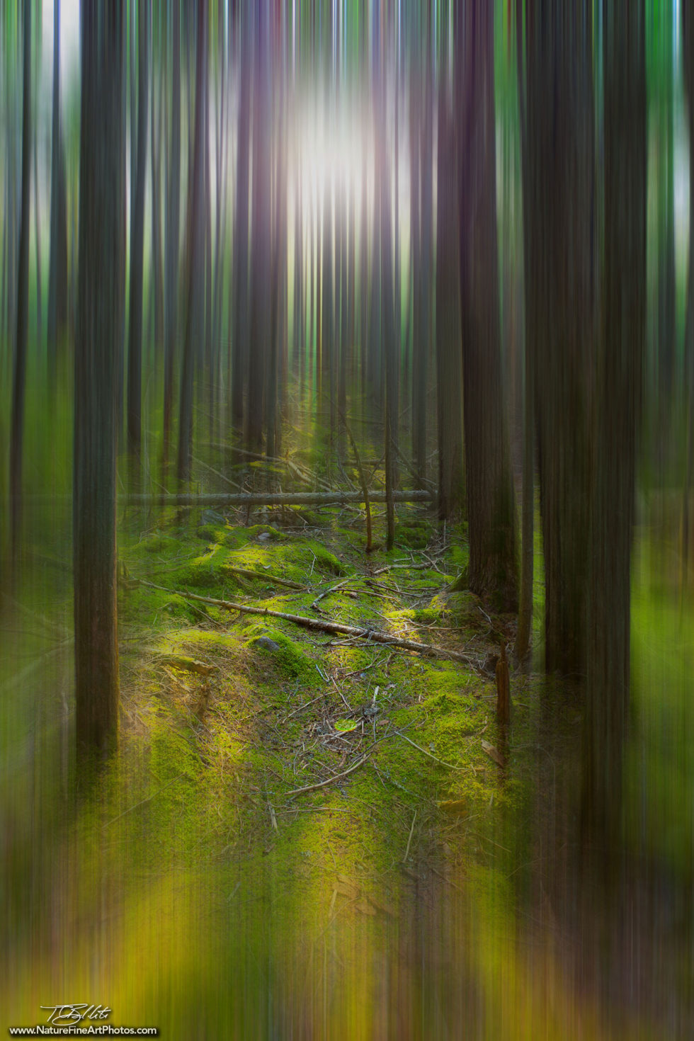 Fine Art Photo of the Enchanted Forest in Motion