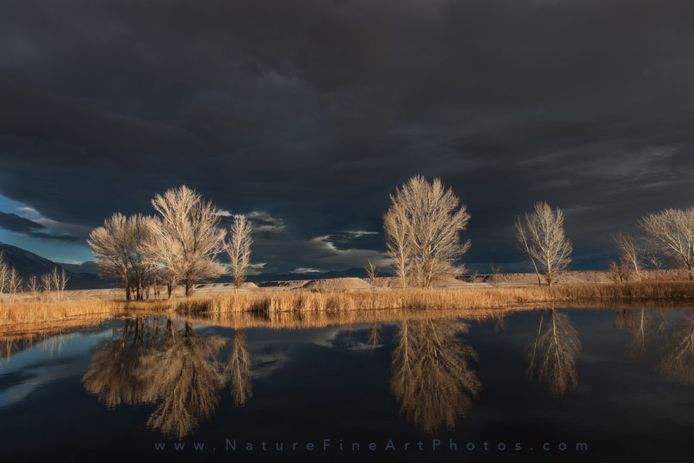 photo of golden trees glow on lake water