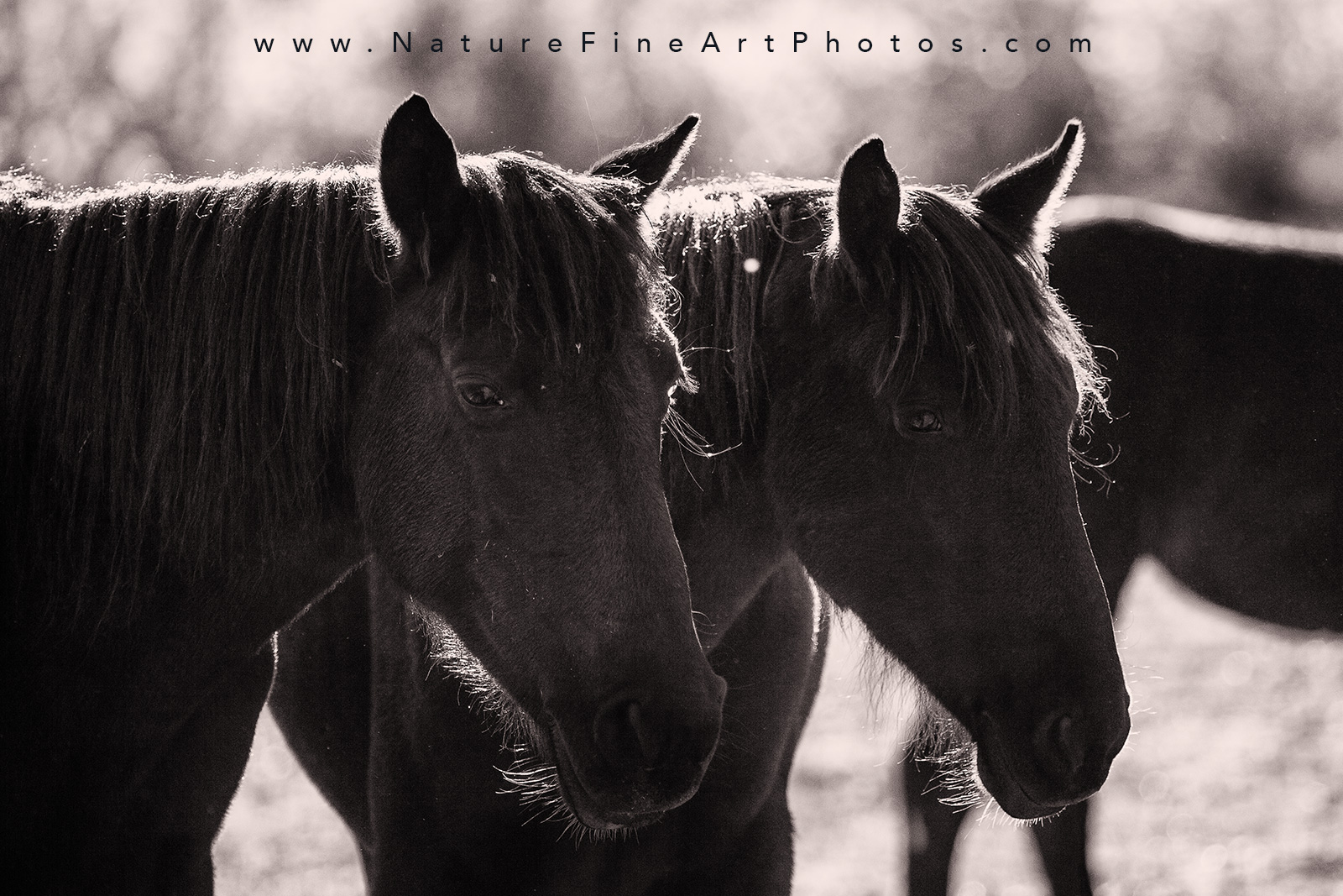 wild horses standing in harmony close up photo