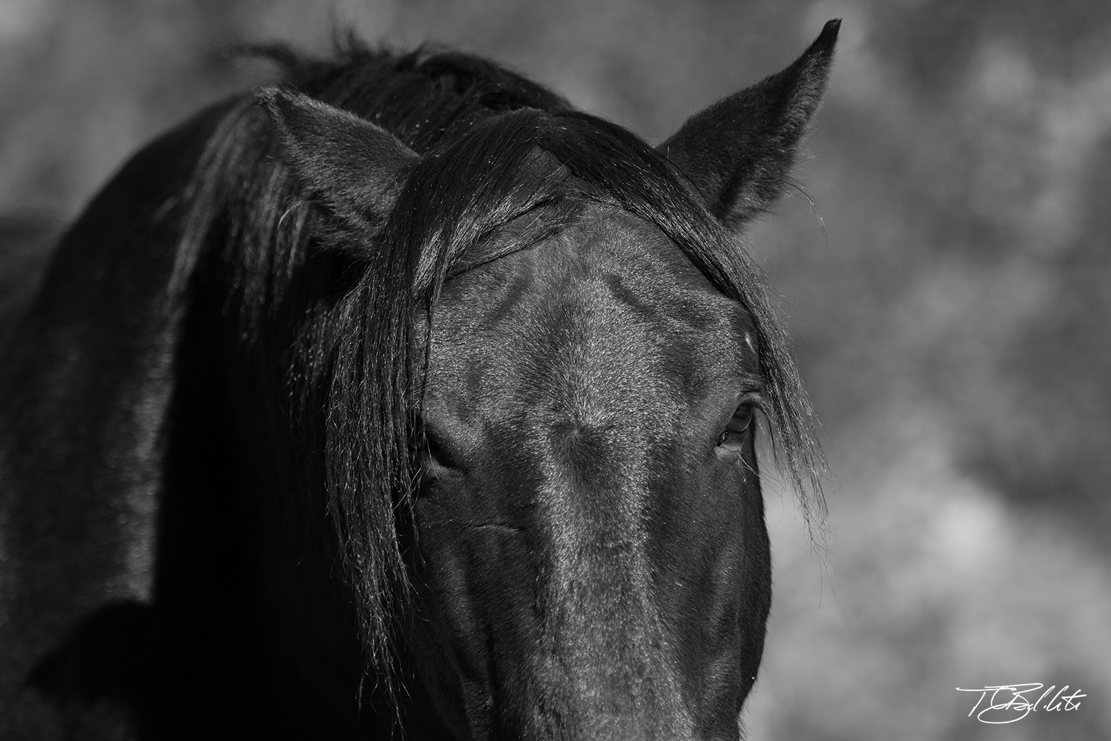 black wild horse close up photo